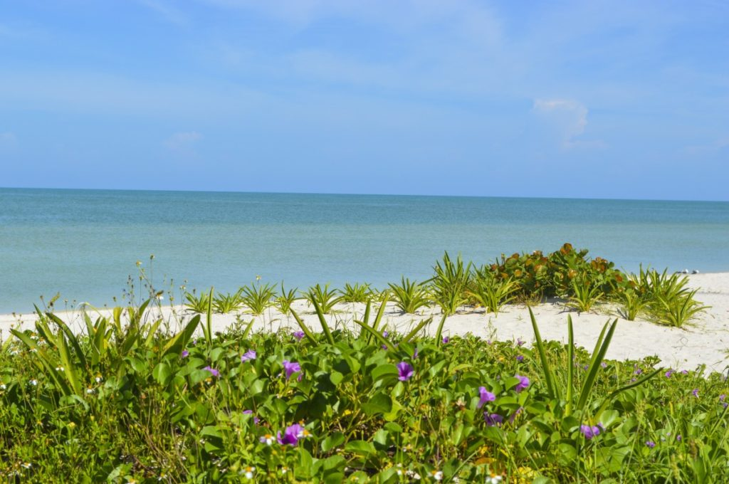 celestun mexico yucatan playa celestun golfo de mexico